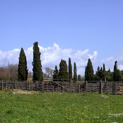 Tarquinia Roccaccia