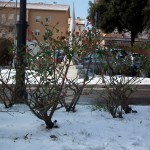 Mattinata-di-neve-002