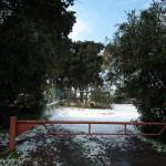 Mattinata-di-neve-032