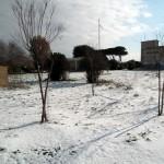 Mattinata-di-neve-054