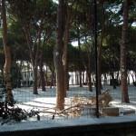 Mattinata-di-neve-060