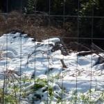 Mattinata-di-neve-063