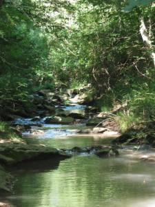 Uno scorcio dei boschi della Roccaccia