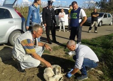 Intervento sul cane Tarquinia