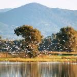 macchiatonda-riserva