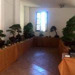bonsai tarquinia